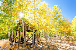 """Shack in the Aspens 10"" - Photograph of an old shack in among aspens with yellow fall colors."