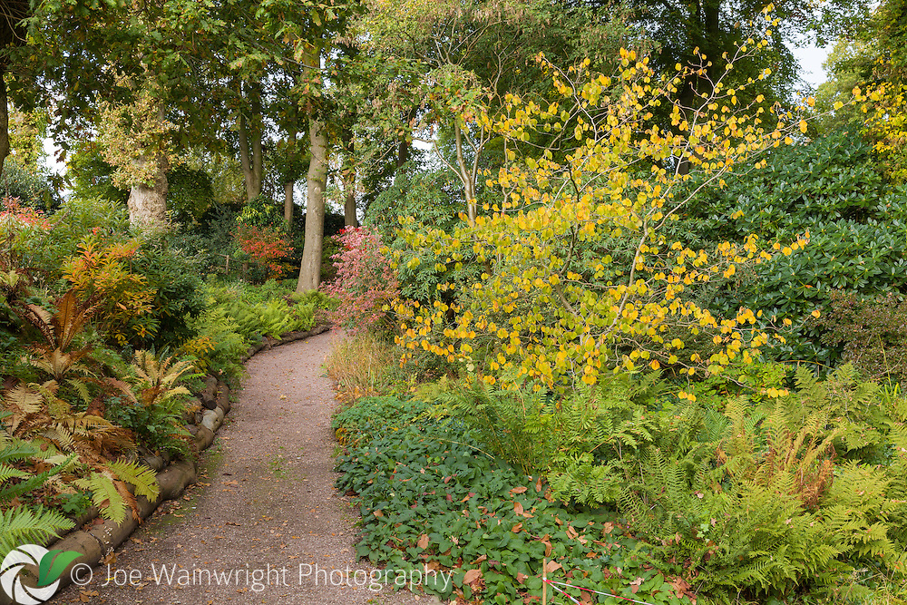 October and the shortening days bring rich colour to Dorothy Clive Gardens, Staffordshire