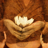 A woman's hands holding a white lotus blossom.