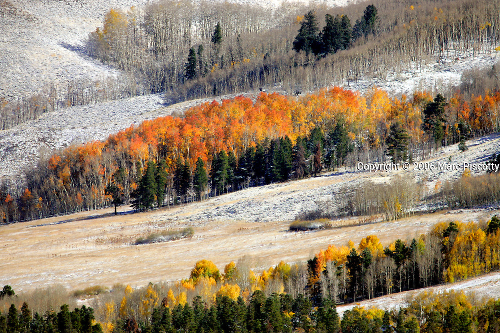 A light dusting of snow covers the ground near Silverthorne, Co. as aspen, still in full fall color, stand in stark contrast to the first signs of winter. A cold front moving through the state dropped temperatures 35 or more degrees yesterday causing an abrupt end to fall as rain quickly turned toi snow in the high country and covering the grouind with a light dusting of snow. The Denver Metro area is expected to see its first hard frost of the season Wednesday evening..(MARC PISCOTTY/ ©2005)