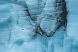 Northern fulmar (Fulmarus glacialis) in front of Austfonna - the second largest ice cap in Europe - at Svalbard