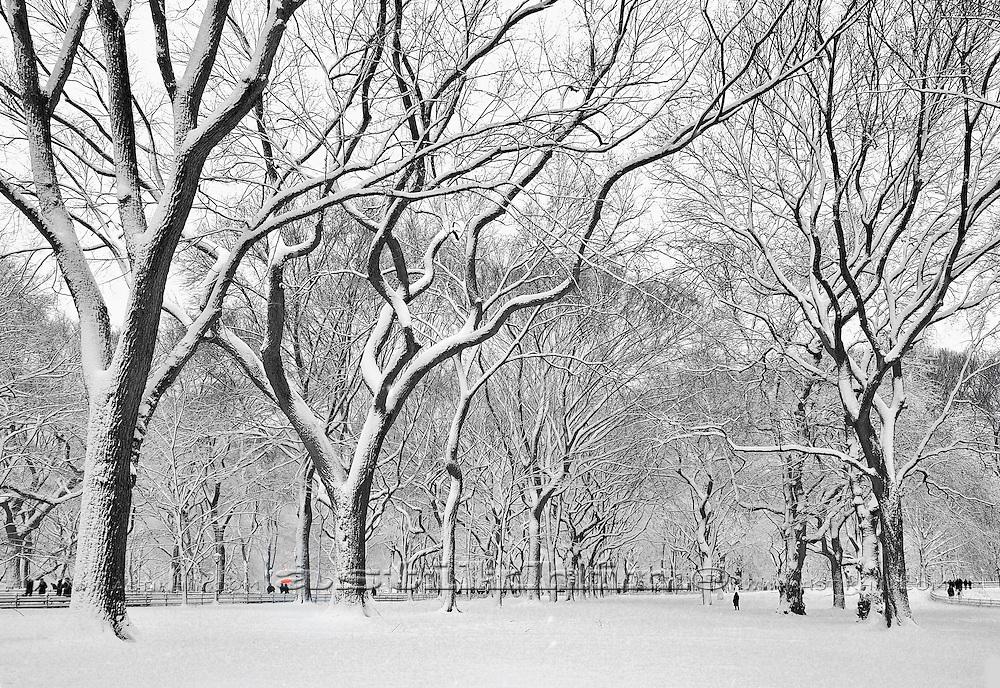 Winter in Central Park, Manhattan