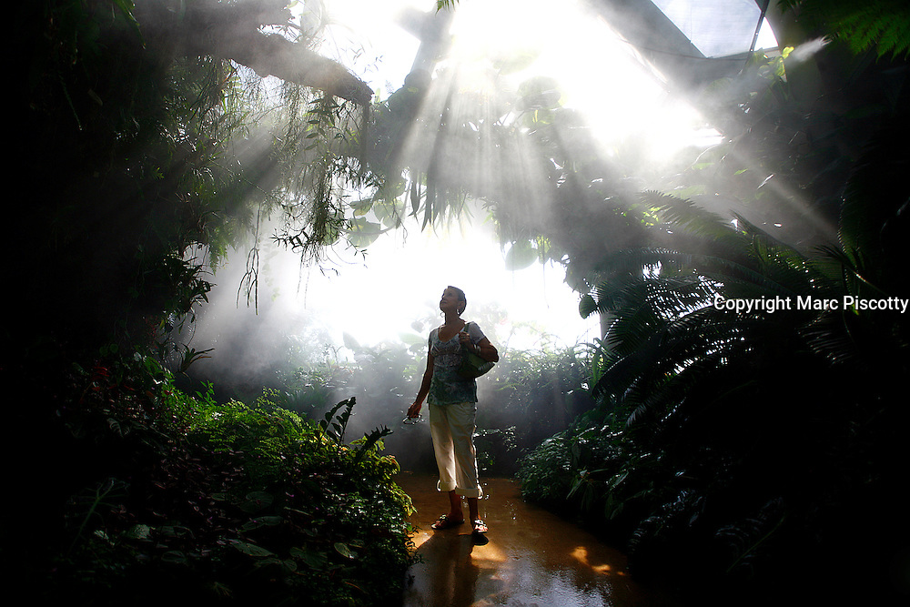 SHOT 6/3/08 3:42:36 PM - Sally Piscotty of Albuquerque, N.M. takes in the sites under the Cloud Forest Tree in the Tropical Conservatory at the Denver Botanic Gardens in Denver, Co. The gardens are a public botanical garden located in Denver, Colorado in the Cheesman Park neighborhood. The 23-acre park contains a conservatory, a variety of theme gardens and a sunken amphitheater, which hosts various concerts in the summer. Woody Allen's 1973 movie Sleeper filmed some scenes at the gardens. The Boettcher Memorial Tropical Conservatory is the largest single structure tropical conservatory in the United States, located at the Denver Botanic Gardens. It was built in 1966 by Claude Boettcher. It incorporates more than 85,000 sq ft. of tropical climate plants inclucing more than 15 carnivourous plants. In 2003, it was re-named the Elizabeth Anna Boettcher Nature Conservatory..(Photo by Marc Piscotty / © 2008)