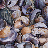 Violet slipper shells contrast with yellow and orange jingle shells, coming together in a painting that harmonizes and energizes. <br />