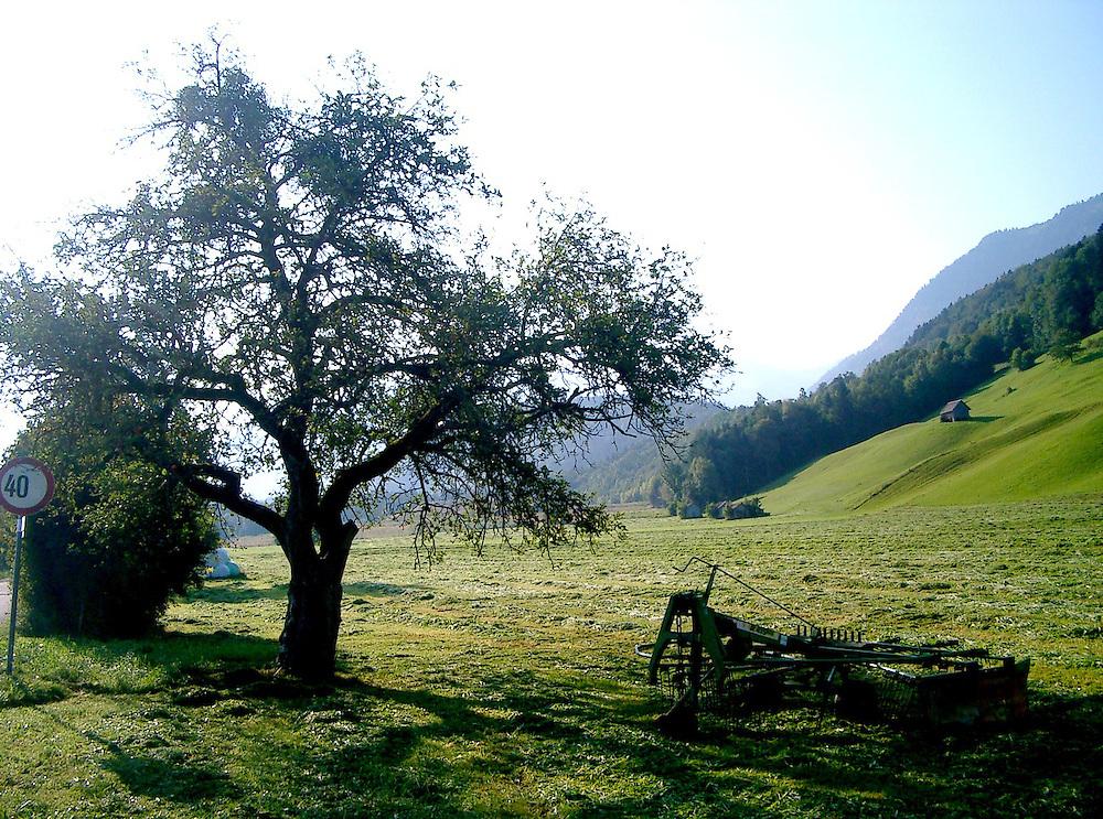 Austrian meadows with Alpine scenery