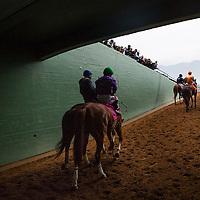 February 07 2015: California Chrome and Victor Espinoza walk to the track for the San Antonio Stakes at Santa Anita Park in Arcadia CA. Alex Evers/ESW/CSM`