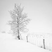 Tree Portfolio I