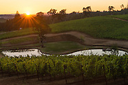 Eola Hills Vineyard