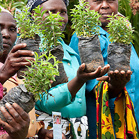 Ladies of the 7 Sisters Women's Group show saplings that they have raised for planting in Machakos County, Kenya. Under the new constitution, the Kenyan government is responsible for ensuring that 10% of all land is covered in forests.<br />