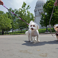 .Sunday May 20, 2012 the Capital K9's held their annual Dogs on the Square event on the Capitol Square in Madison, Wisconsin.