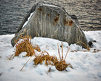 Dead grass and rock along the harbor walkway. Winter walkabout in Tromsø, Norway. Image taken with a Nikon 1 V2 camera and 18.5 mm f/1.8 lens (ISO 180, 18.5 mm, f/2.8, 1/500 sec).