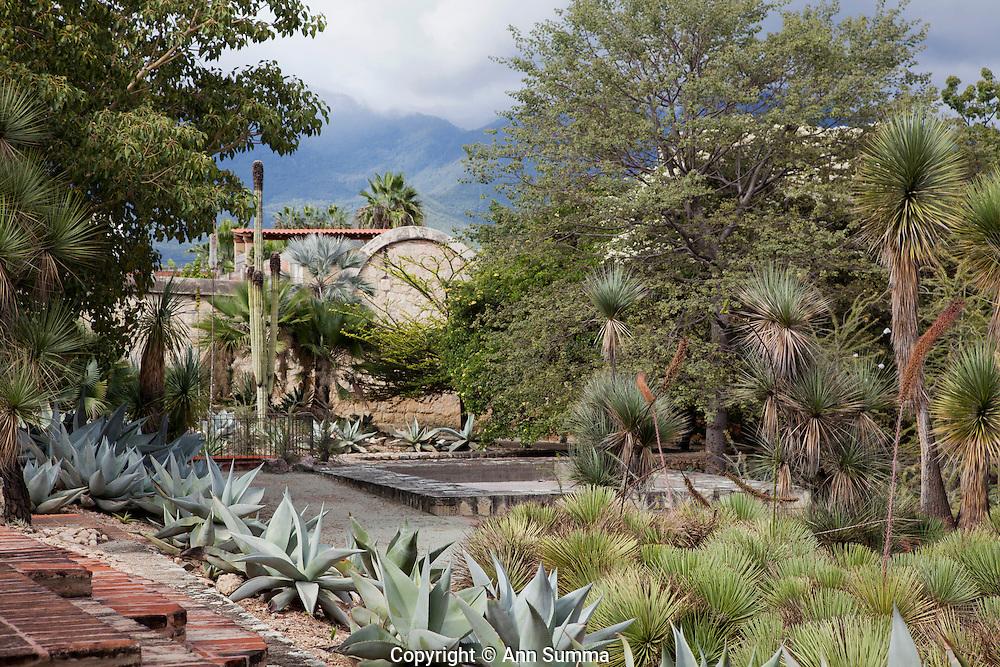 Jardin ethno botanico oaxaca mexico ann summa for Jardin botanico medicinal