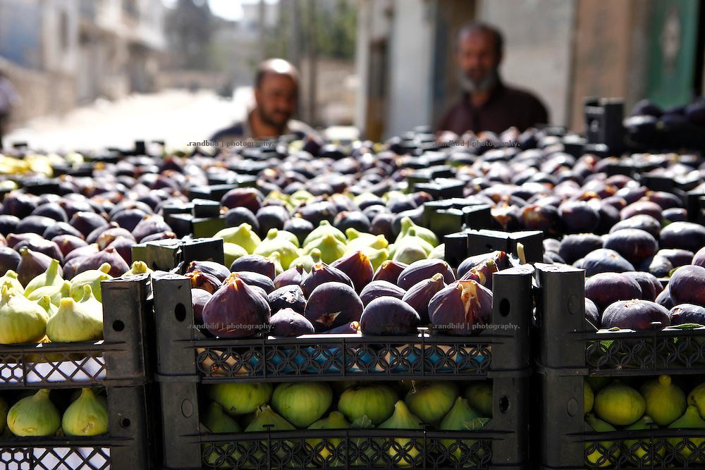 Fig harvest has recently begun in Kurin. A trader loads a pickup to deliver the boxes full of first and fresh figs to Maarat Misreen (north of Idlib) to a central market.<br />