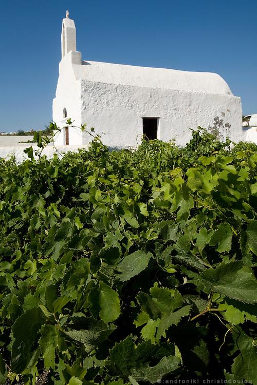 SANTORINI ISLAND - GREECESmall church and vine farm at Santorini island. Santorini produces some of the best Greek wine.