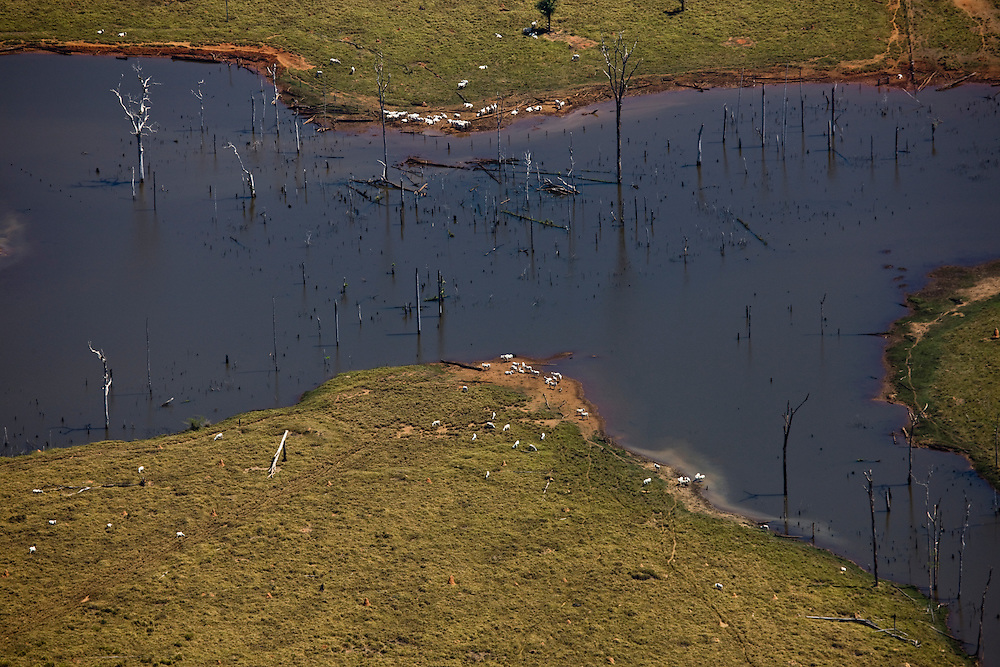 Rainforest near the Fazenda Sao Joaquim (cattle farm), Mato Grosso, Brazil, August 6, 2008..Daniel Beltra/Greenpeace