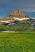 Mount Reynolds and field of Glacier Lilies at Logan Pass;  Going to the Sun Road,  Glacier National Park, Montana.