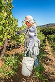Casablanca Valley Matetic Wine