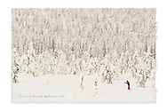 Cross country skier in the Finnish forest