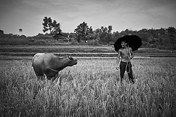 A Vietnamese man standing in a field holding an umbrella smiles at a water buffalo, Tan Yen District, Bac Giang Province, Vietnam, Southeast Asia