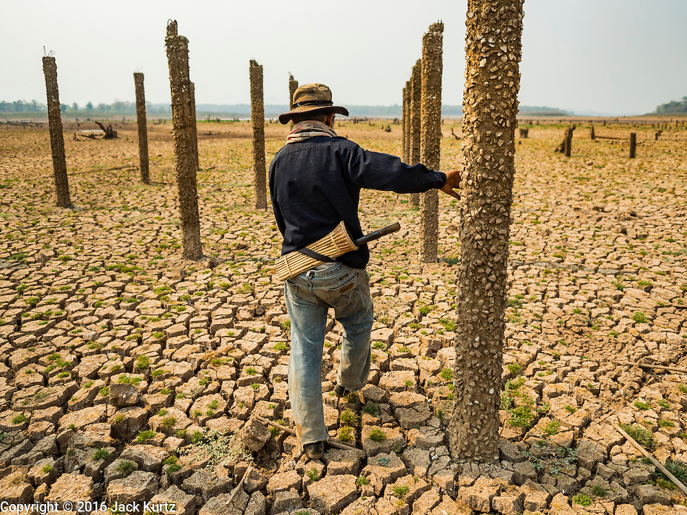 31 MARCH 2016 - NA SAK, LAMPANG, THAILAND:  A farmer walks through the ruins of a village in the Mae Chang Reservoir. This is first time in more than 30 years that the village has been visible. The Mae Chang Reservoir in Lampang province was created more than 30 years ago when the Chang River was dammed. Five villages along the river were relocated to hillsides above the river. For the first time since it was flooded, the reservoir is nearly empty and the ruins of the old villages are visible. Many people who remember the old villages are coming down to the ruins to visit them. This part of Thailand hasn't received significant rain in months and many irrigation canals and streams are running dry.   PHOTO BY JACK KURTZ