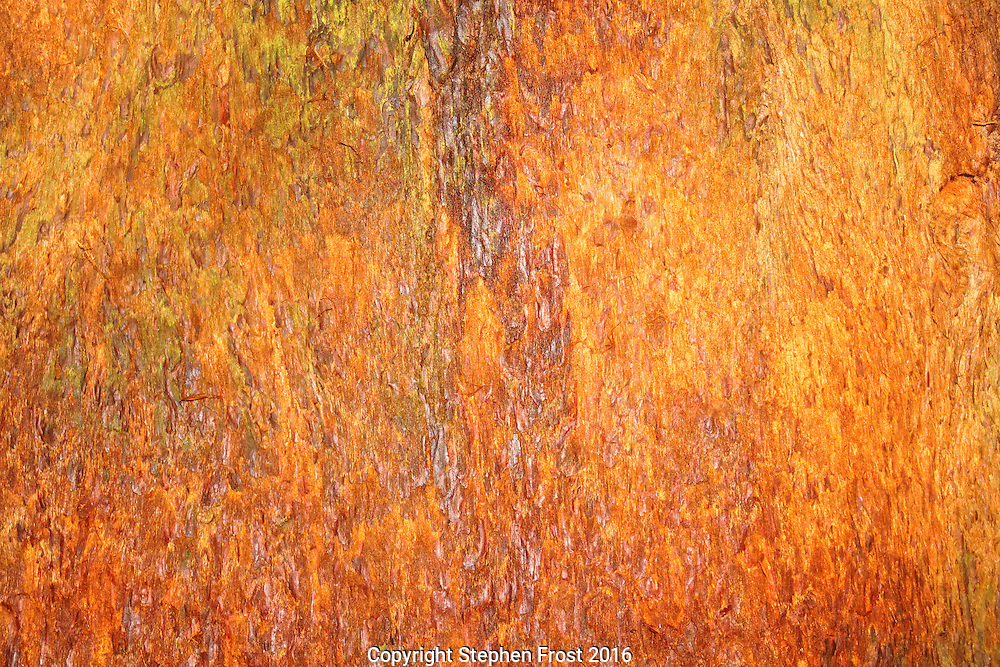 Spectacular redwood tree bark in close-up.