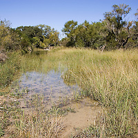 Wetlands area at the Hill Country Natural Area, near Bandera, Texas.