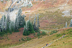 Hikers descend the final steps of the series of switchbacks on the Golden Gate Trail which climbs out of the Edith Creek basin in the Paradise Meadows in Mount Rainier National Park, WA, USA.