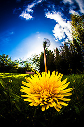 Flowers in the Dennyloanhead sunlight..©Michael Schofield..
