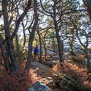 Acadia Mountain Trail features boulder gardens sprouted with gnarly trees twisted by harsh weather, appearing like a Japanese garden. The trail tops out with good views of Somes Sound and peak fall colors typically in the second week of October, in Acadia National Park, near Bar Harbor, on Mount Desert Island, Maine, USA. Hike granite peaks and enjoy Atlantic coastal scenery. Originally created as Lafayette National Park in 1919, the oldest National Park east of the Mississippi River, it was renamed Acadia in 1929. During the last glacial maximum 21,000 years ago, glaciers measuring up to 9,000 feet thick cut into granite ridges, sculpting the fjord-like Somes Sound.