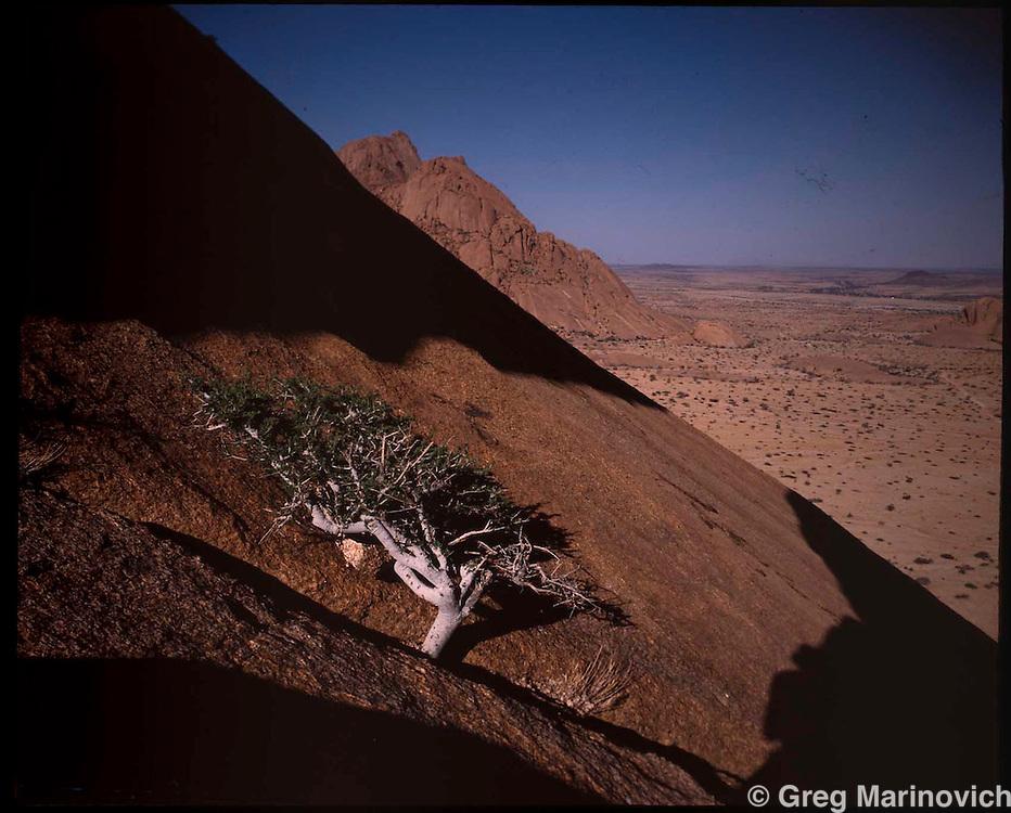 Tree on the sheer rock of Spitzkop, Nambiai, 1990. Greg Marinovich