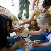 High school juniors and seniors participate in the Adventures in Veterinary Medicine program at the Tufts University Cummings School of Veterinary Medicine, a week of hands-on experience for high school and middle school students to help them decide if they want to enter the profession. (Melody Ko/Tufts University)