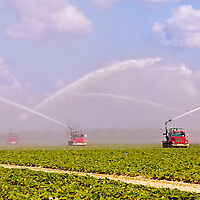 Truck-mounted water pumps irrigate vegetable fields near Homestead, Florida.