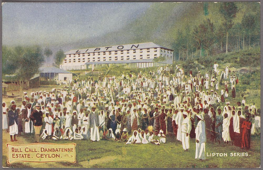 Roll call at Dambatenne Estate. Lipton series. circa 1908
