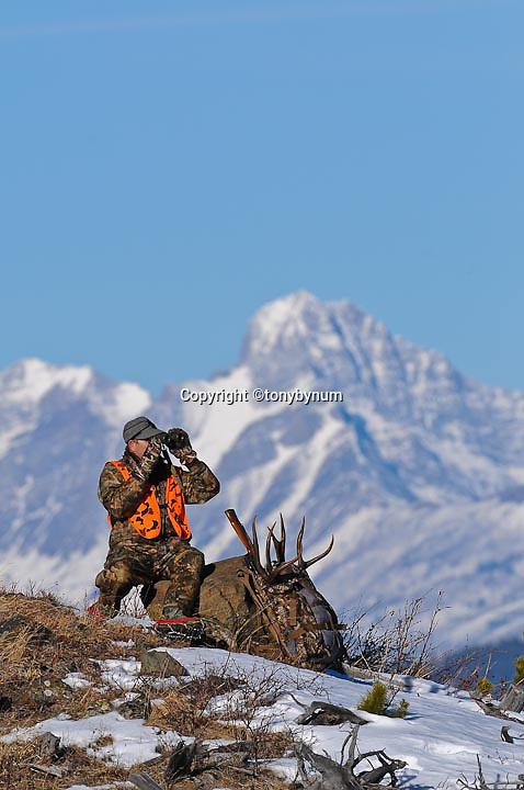 Mule deer hunter backpacking big trophy antlers, binoculars looking though