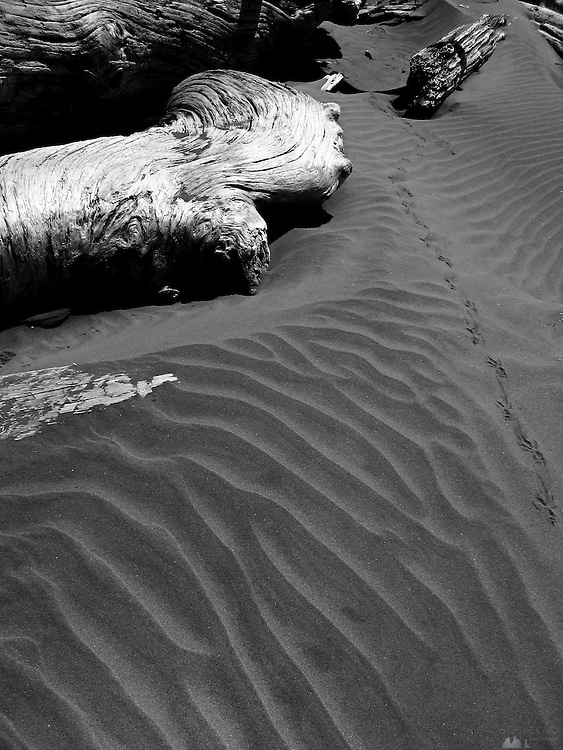 Driftwood along Long Beach, a huge stretch of beach in the Pacific Rim National Park, just south of Tofino, on Vancouver Island's west coast