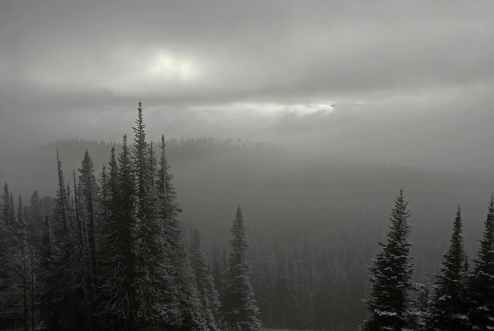 An early season snowstorm darkens the afternoon sky over Dunraven Pass in Yellowstone National Park.<br />  <br /> This image was an honorable mention in the 2007 Wyoming Wildlife Magazine Photo Contest &quot;Color Scenic&quot; category.