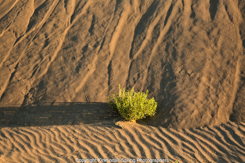 ID00660-00...IDAHO - Lines and texture in the early morning light at Bruneau Dunes State Park.