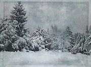 Snow covered trees - texturized photography<br />