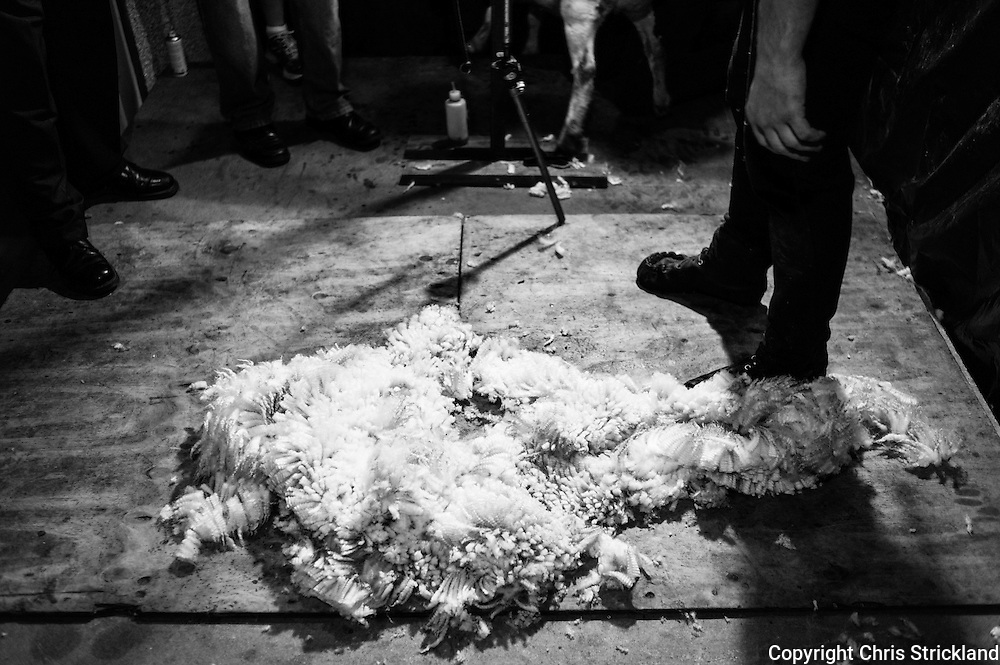 Horse & Hound Inn, Bonchester Bridge, Hawick, Scottish Borders, UK, 8th August 2015. Sheep shearers compete in the annual Pub sheep shearing tournament in Bonchester Bridge. Una Cameron was the overall winner with a time of 24.18 seconds, also achieveing the honour of being the first woman to win the competition.