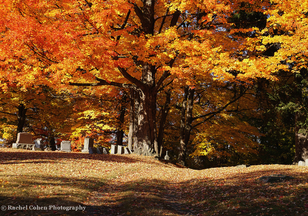 &quot;Resting Under the Maples&quot; <br />
