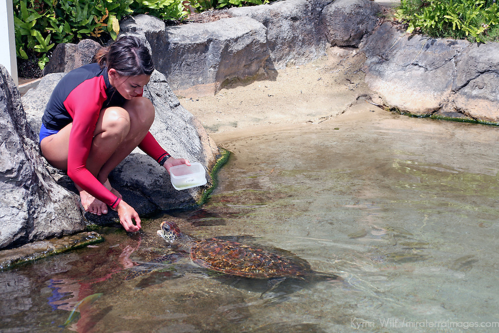 "Staff of ""Dophin Quest"" feeds threatened Green Sea Turtle as part of encounter for children to learn about marine wildlife."
