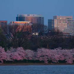 Viewing the Rosslyn neighborhood of Arlington, Virginia from the cherry blossom tree lined Tidal Basin, Washington, DC
