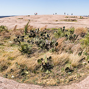"""Cactus and grass grow in a bowl atop Enchanted Rock. Explore a large pink granite dome at Enchanted Rock State Natural Area, between Fredericksburg and Llano, Texas, USA. Enchanted Rock is a fascinating exfoliation dome (with layers like an onion), rising 425 feet (130 m) above its surroundings to elevation of 1825 feet (556 m) above sea level, in the Llano Uplift. Geologically, the exposed rock (monadnock or inselberg, """"island mountain"""") is part of a pluton (bubble of rock slowly crystallized from magma) within the billion-year-old igneous batholith, Town Mountain Granite (covering 62 square miles mostly underground), which intruded from a deep pool of hot magma 7 miles upwards into the older metamorphic Packsaddle Schist. The overlying sedimentary rock (Cretaceous Edwards limestone) eroded away to expose the prominent domes seen today: Enchanted Rock, Little Rock, Turkey Peak, Freshman Mountain, and Buzzard's Roost. This panorama was stitched from 2 overlapping photos."""