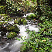Mountain stream in the rainforest on Gunung Bondang Mountain
