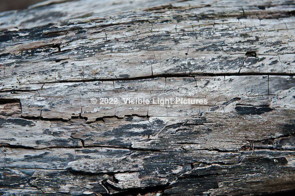 Detail of driftwood