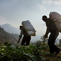 Heavy sacks of potatoes from Durga&rsquo;s farm are taken down the hill to be sold. Most members of the community work on an exchange labor basis. When one family needs help harvesting, family and neighbors come to help with the workload in exchange for food and beverages. It is expected that they will do the same for each of these community members when the time is needed.<br />