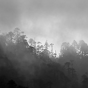 Fog and Evergreens along the Bumthang - Ura Highway, Bhutan, 2014