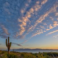 Mexico, Baja California sur, Baja, La Ventana, Sea of Cortez, Pachycereus pringlei, cardon cactus at sunrise