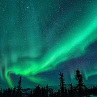 Aurora Borealis at Chena Hot Springs,Fairbanks,Alaska,USA