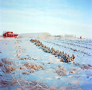 Meyers Farm in Bethel, Alaska. 2011